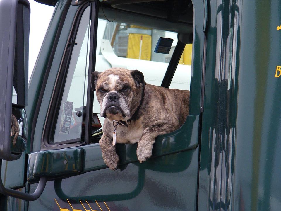 Víte, jak bezpečně přepravovat v autě psa?